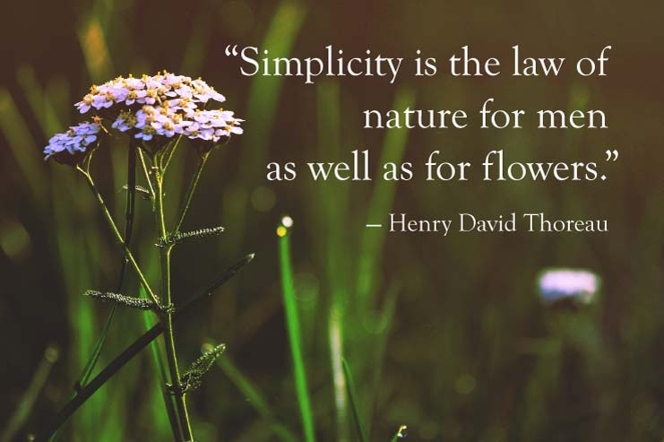 Simplicity is the law of nature for men as well as flowers - Thoreau